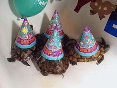 The 20 Funnest Animal Parties Ever