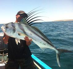Mexique Fish, Mexico