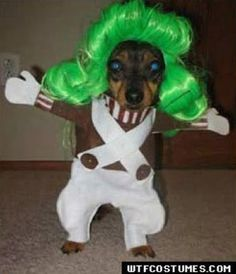 I dont know WHO would do this to a dog, buts its DANG funny! Oompa Loompa doopidee dee....