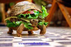 tortuga burger