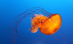 Jellyfish by Viviana Singh