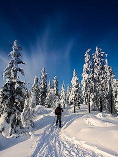 cross country ski goals for CO I Love Winter, Winter Snow, Winter Time, Nordic Skiing, Cross Country Skiing, Winter Sports, Winter Scenes, Outdoor Fun, Rafting