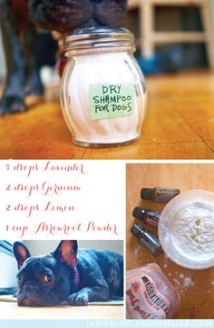 Dog Dry Shampoo using essential oils! Perfect for my itchy french bulldog… Dry Dog Shampoo, Homemade Dog Shampoo, Natural Dog Shampoo, Flea Shampoo, Coconut Oil For Dogs, Vanilla Essential Oil, Essential Oils Dogs, Oils For Dogs, Diy Stuffed Animals