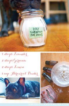 Dog Dry Shampoo using essential oils!  Perfect for my itchy french bulldog.  || http://iamablog.andiamlisa.com