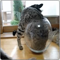 After investigation, Bob and Mark discover the volume of the jar is Steve. - Imgur