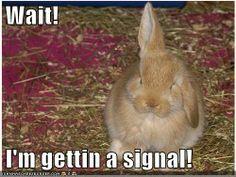 Cute! #Rabbit #bunny