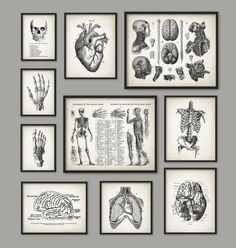 Human Anatomy Antique Art Print Set of 10 - Vintage Anatomy Home Decor - Antique Book Plate - Medical Student Gift Idea Picture Set of 10  Printed
