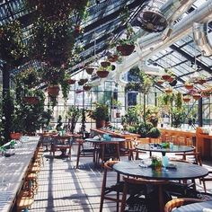 Had the pleasure of staying at the incredible @thelinehotel last year, what a treat! The Commissary, their rooftop greenhouse oasis and restaurant reinvigorated my love of plants and bringing the outside in. If you're in LA definitely worth a visit!! @thelinehotel #PLNTLVRS #plantspiration #plants #indoor #indoorplants #jungle #greenhouse #hotel #thelinehotel #losangeles #la #interior #interiordesign #interiordecor #houseplants #indoorgarden #love #want #need #melbourne #popup #comingsoon