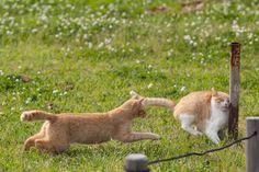 cat-pic:  前見ろ前ーーーッ!!