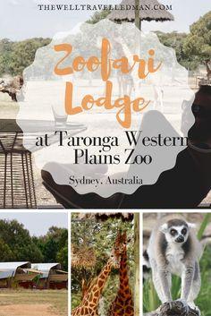 Australia's Own Safari! What to expect at the Zoofari Lodge at Taronga Western Plains Zoo in Dubbo Australia