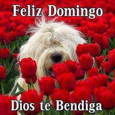 :) Feliz Domingo !!