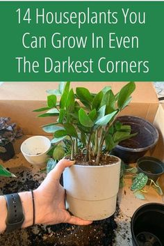 Indoor Plants Low Light, Best Indoor Plants, Indoor Water Garden, Indoor Gardening, Outdoor Gardens, House Plants Decor, Garden Plants, Caladium Garden, Flowering House Plants