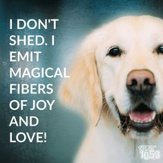 Haha. This will surely be my answer the next time someone falls in love with Riley then realizes they are covered in his fur.