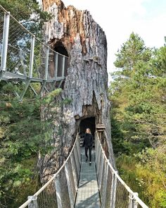 You Can Walk Through This Massive Elevated Treetop Trail Near Ontario This Spring - Narcity Beautiful Places To Visit, Oh The Places You'll Go, Cool Places To Visit, Places To Travel, Day Trips, Weekend Trips, Ontario Travel, Canadian Travel, Vacation Destinations