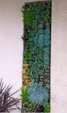 Here landscape designer Debora Carl created a living wall of succulents and grasses, which is easy to care for but trickier to hang! Love Wall, Small Garden Design, Water Plants, Flower Beds, Design Projects, Design Ideas, Landscape Design, Succulents, Wallpaper