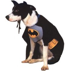 $16.00 Batman Dog Halloween Costume Pet Size Large - Caped Crusaders don't always have to be human! If you're looking for a great look for your four-legged friend, then you need this Batman Dog Halloween Costume! Our Batman Dog Halloween Costume comes with a grey and black Batman suit, with a printed yellow belt and the Batman logo over the chest! There is also an attached black cape and even a b ...