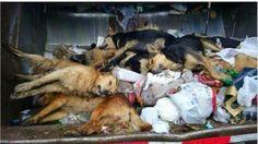 SandRamirez contra el maltrato animal. • www.luchandoporellos.es: BASTA DE ENVENENAR A PERROS CALLEJEROS [LIMA, PERÚ...