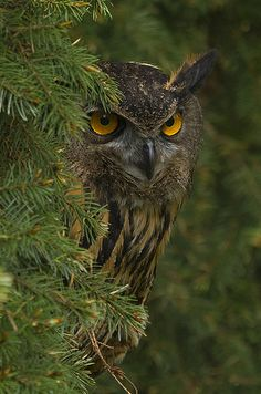 Into The Forest - Eagle Owl by Jane Turner