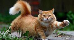 Kucing Adalah Binatang Lucu dan Dijadikan Binatang Peliharaan Raja-Raja Mesir | Pinterest | Tegg Sabrina | #berita #news #informasi #portalberita #malesnulis