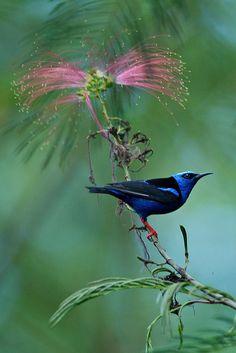 beautiful bird in Costa Rica