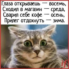 Truth Of Life, Crazy People, Kobe, Good Morning, Thoughts, Humor, Pets, Funny, Animals