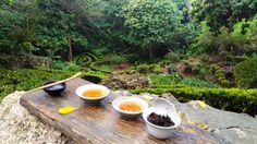 Monkey Mountain Tea Session | Kaohsiung | Taiwan | teacrowns.com