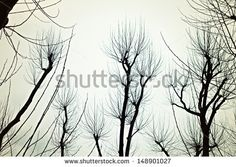 Bare branches of the trees in the background of the autumn sky - stock photo