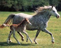 fotos paarden   Paarden