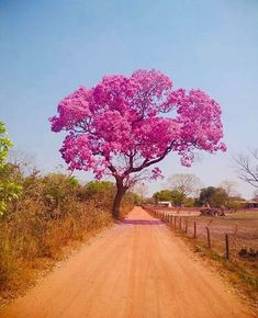 Unique Trees, Colorful Trees, Beautiful Flowers Garden, Amazing Flowers, Bing Backgrounds, Foto Picture, Crazy Wallpaper, Pretty Landscapes, Scenery Paintings