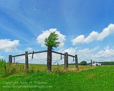Photo of a summer landscape with a living fence post at the edge of a green field with a bright blue summer sky and fluffy white clouds. Americana delight!  Click on the link to purchase this photo.  Summer Landscape Photo With Fence  Rustic by AnneFreemanImages, $15.00  ~ Anne Freeman Images ~ Prints to Make you Smile ~