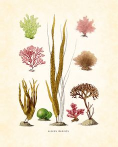 Vintage French Sea Plants Natural History Art Print 8x10 Home Decor Home and Garden Wall Art Coastal Decor Beach Cottage on Etsy, $10.00