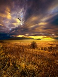 ensphere:    Wings and Prayers (by Phil~Koch)