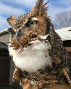 #Owl Lover