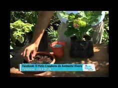 Cápsula de Jardinería : Las Hortensias, cuidados y mantenimiento