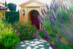 Dymondia margaretae, Silver Carpet, drought tolerant groundcover, ground covers, grouncover, perennial ground cover