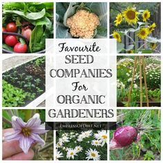 "Favorite Seed Companies For Organic Gardeners. ""The seed companies listed here are ones I have ordered from and/or ones that are highly recommended by Empress of Dirt readers from other regions. There are lots more top quality ones besides those listed here."""