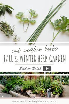 106 Best Herb Garden Images In 2020 Herb Garden Herbs Growing