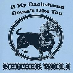 If My Dachshund Doesn't Like You I won't either. My dachshund likes almost everybody anyway. Dachshund Funny, Mini Dachshund, Daschund, I Love Dogs, Puppy Love, Cute Dogs, Like You, My Love, Weenie Dogs