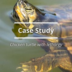 Visit our website to complete this interactive veterinary case study.