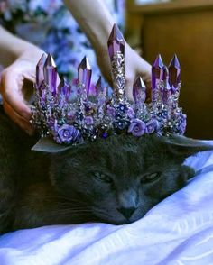 what a beautiful crown for kitty