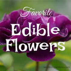 Discovering edible flowers that are already in my flower garden is a fun adventure. Learn some vital basic safety precautions and some tasty blooms. Unique Flowers, Edible Flowers, Amazing Flowers, Utah Gardening, Container Herb Garden, Raised Flower Beds, Garden Crafts, Garden Ideas, Landscaping With Rocks