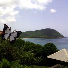 Prendre de la hauteur et trouver l'inspiration. Deshaies, #Guadeloupe. #Effetpapillon #TEDxPTP