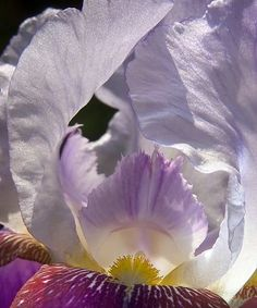Iris Macro - Webshots Home & Garden, the best photos flower wallpaper