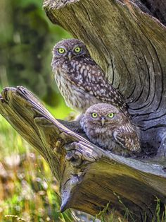 Rate this amazing photo that Des lloyd entered in 'Wildlife'. Do some rating @photocrowd