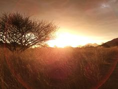 Photo by Adrienn Racz Sun Worship, Us Travel, Wildlife, Tours, Sunrises, Landscape, South Africa, Outdoor, Places