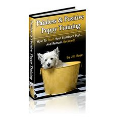 Dog Training School, Dog Training Classes, Dog Training Videos, Training Your Puppy, Chameleon Care, Animal Reiki, Pet Lizards, Build A Dog House, Horse Therapy