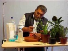Çiçek Çoğaltımı - Çiçeklerin (Yapraktan) Çoğaltımı - YouTube