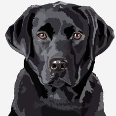 Animal Paintings, Animal Drawings, Posca Art, Dog Quilts, Black Labrador, Dog Portraits, Beautiful Dogs, Dog Art, Dog Pictures