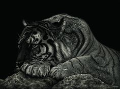 Power at Peace by Sandra LaFaut Scratchboard Etching ~ 9 x 12