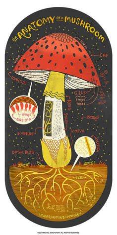 Die Anatomie einer Pilz-Kunstdruck von Rachelignotofsky auf Etsy poster The Anatomy of a Mushroom art print Art And Illustration, Medical Illustration, Illustrations Posters, Mushroom Art, Mushroom Puns, Anatomy Art, Eye Anatomy, Art Graphique, Love Drawings